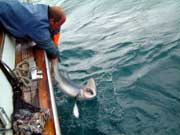 Shark Fishing